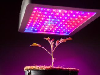 Things To Be Aware Of When You Choose LED Growing Lights